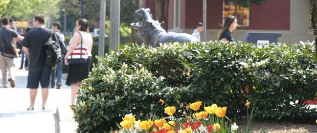 Hippo in the Spring